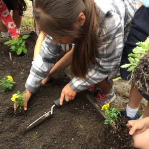 Students Planting at St. Egberts School