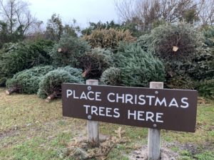 Christmas Tree collection at Fort Macon State Park