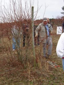 Dr. Bill Cline holding lopers as he teaches blueberry pruning in the field