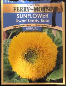 Dwarf Teddy Bear Seed Pack - Front