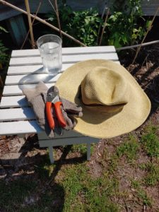 Photo Safety and Summer Garden Hydration