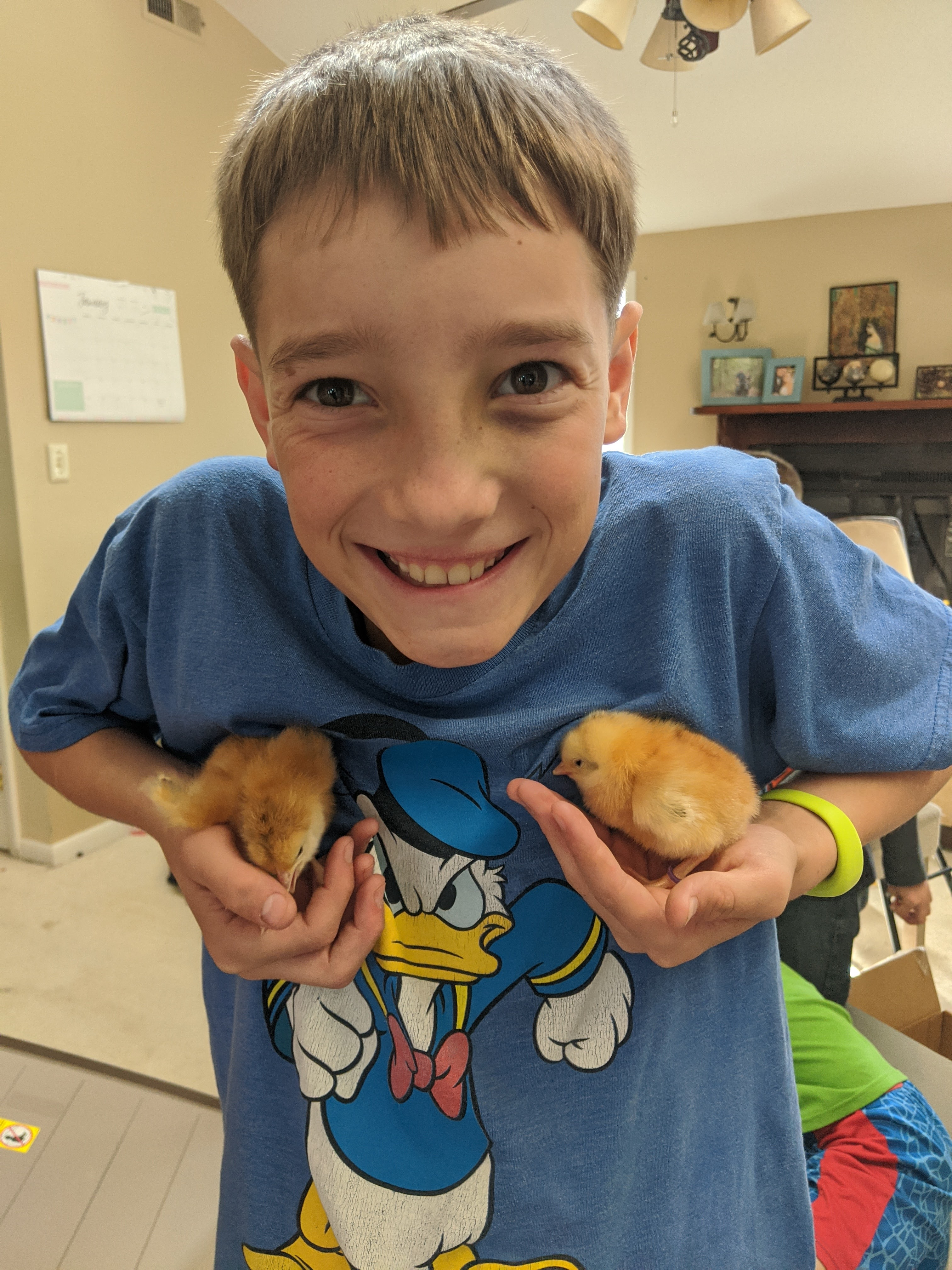 Ethan and his chicks