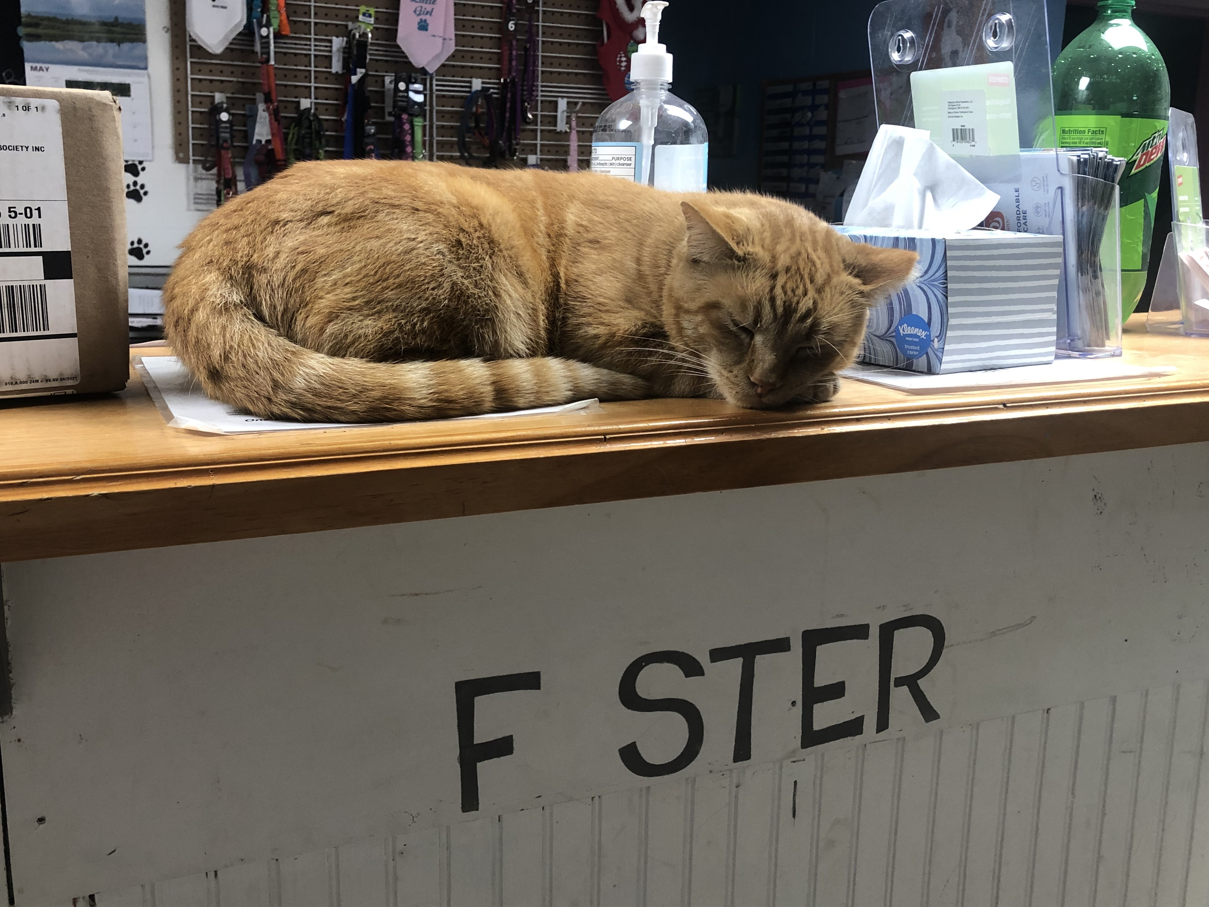 Foster with Cat