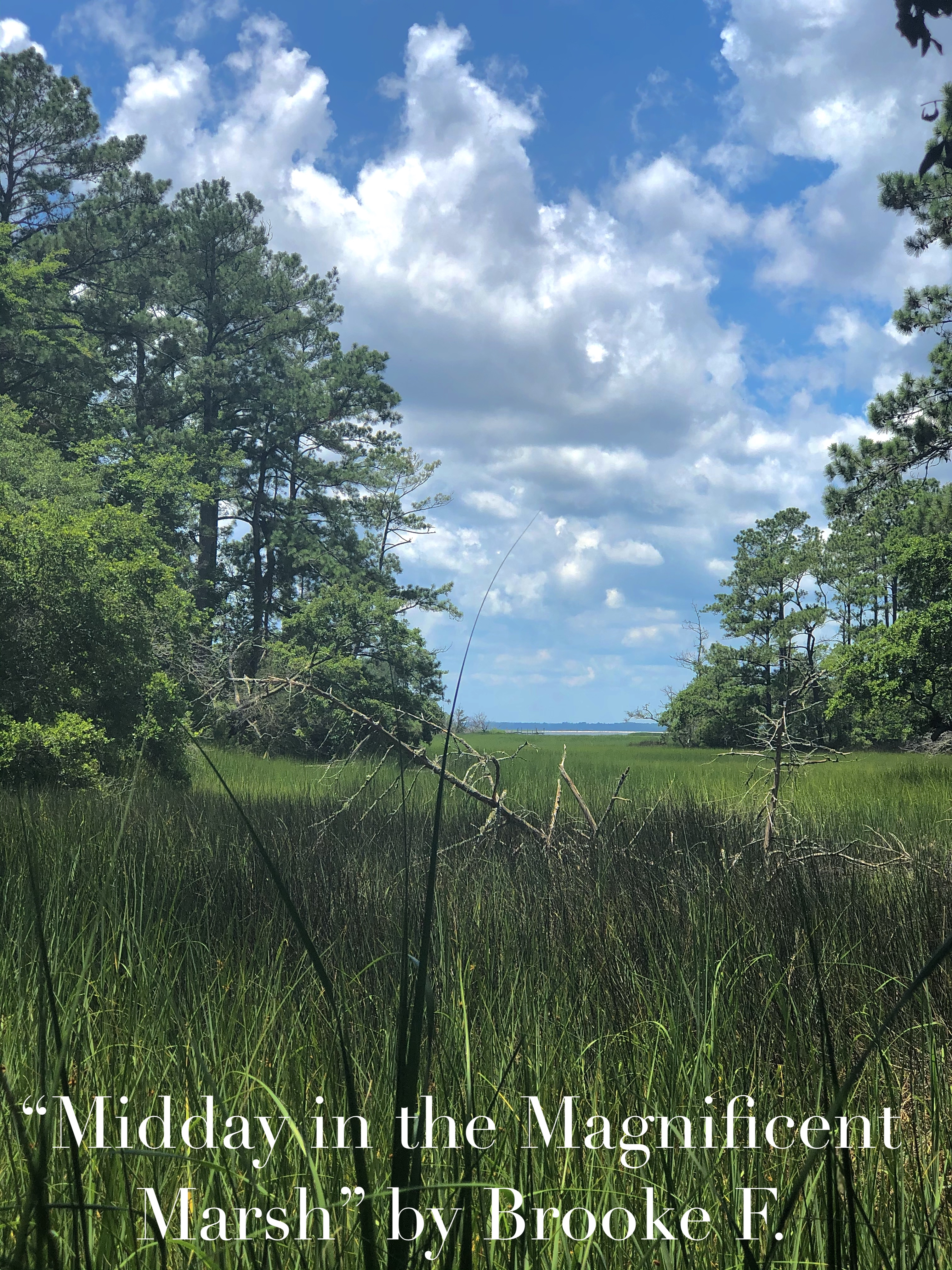 """2020 1st place Intermediate Division: Nature's Beauty """"Midday in the Magnificent Marsh"""" taken by Brooke F."""